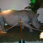 animaux-resine-rhinoceros-safari-showrgevent